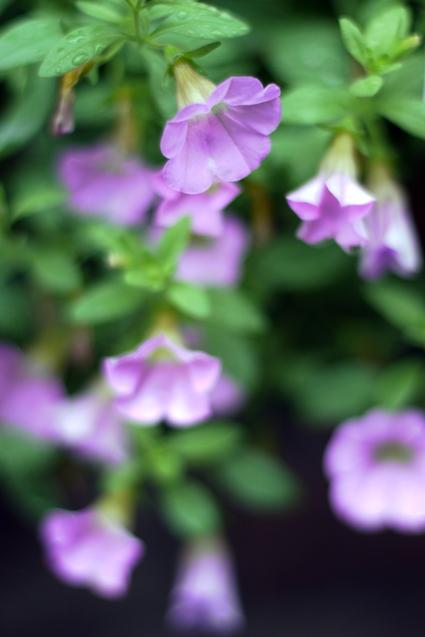 Flower_rain_01