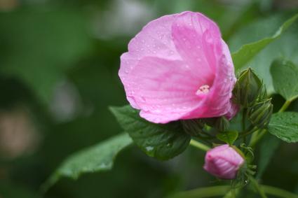 Flower_rain_02