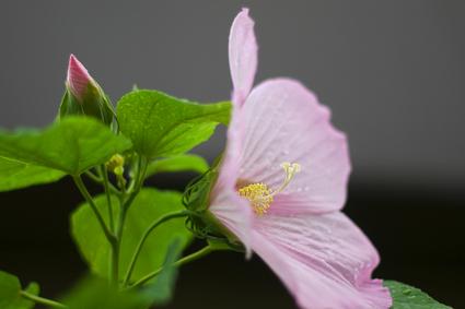 Flower_rain_06