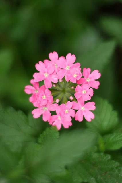 Flower_rain_07