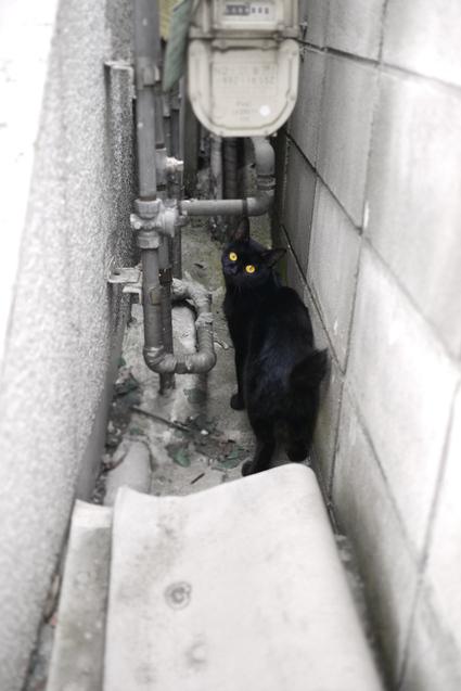 Cat_street